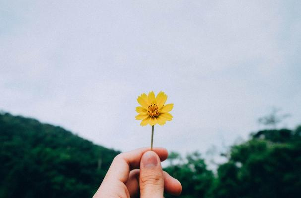 Yellow flower to symbolise joy and happiness